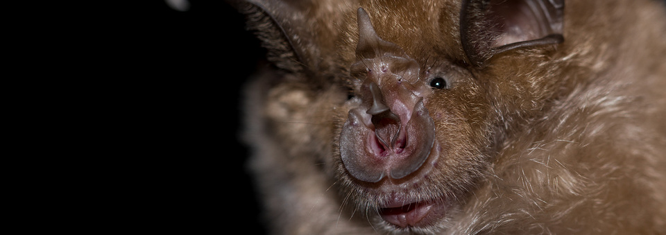 "Participate in a free course ""Bats – the real superheroes"""