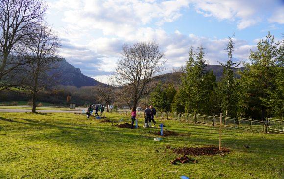 Успешно засадихме 230 плодни дръвчета в Източни Родопи