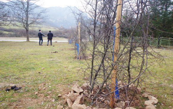 Успешно поставихме ограда от обикновена драка на нашите дърветa